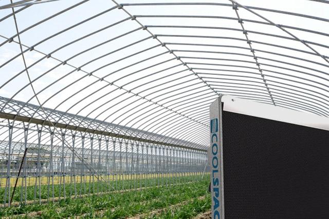 業務用大型冷風機クールスペース グリーンハウス&農業